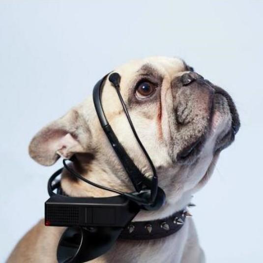 EEG Headgear